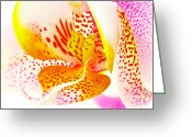 White Orchids Greeting Cards - Pink Orchid Greeting Card by Kristin Kreet