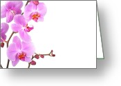Copy-space Greeting Cards - Pink orchids Greeting Card by Jane Rix