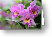 Florida Flowers Greeting Cards - Pink Orchids Greeting Card by Sabrina L Ryan
