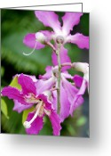 Tropical City Prints Greeting Cards - Pink orchids Greeting Card by Toni Hopper