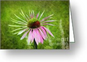 Cone Flower Greeting Cards - Pink Petals Greeting Card by Andee Photography