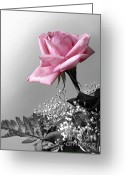 Florist Greeting Cards - Pink Petals Greeting Card by Carlos Caetano