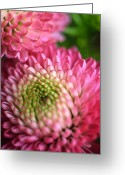 Pink Framed Prints Greeting Cards - Pink Pompons Greeting Card by Kathy Yates