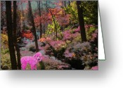 Fall Whimsical Digital Art Greeting Cards - Pink Poodle Paradise Greeting Card by Anne Cameron Cutri