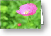 Green Day Greeting Cards - Pink Poppy In Green Meadow Greeting Card by Itsabreeze Photography
