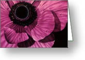 Hyper Greeting Cards - Pink Poppy Greeting Card by Linda Hoard