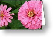 Kansas City Missouri Greeting Cards - Pink Posy Pano Greeting Card by Andee Photography