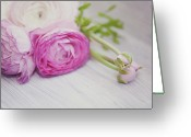 Ranunculus Greeting Cards - Pink Ranunculus Flowers On White Wooden Shelf Greeting Card by Isabelle Lafrance Photography