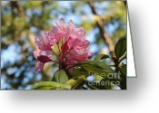 Pink Flower Prints Mixed Media Greeting Cards - Pink Rhododendron - photographed by Detroit Lake Oregon Greeting Card by Photography Moments - Sandi