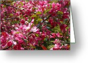 Floral Greeting Cards - Pink Riot Greeting Card by Lynn-Marie Gildersleeve