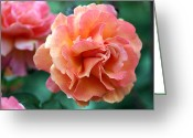 Chevalier Greeting Cards - Pink Rose 4 Greeting Card by Elizabeth Chevalier
