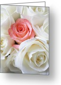Delicate Bloom Greeting Cards - Pink rose among white roses Greeting Card by Garry Gay