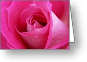 Flowers Floral Greeting Cards - Pink Rose Greeting Card by Amy Fose