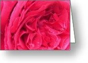 Creative Passages Photo Greeting Cards - Pink Rose Closeup Greeting Card by Cassandra Donnelly