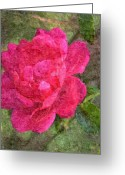 Digital Flower Greeting Cards - Pink Rose Greeting Card by Dawn OConnor