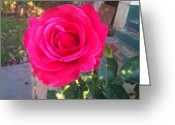 Phuong Tu Greeting Cards - Pink Rose Greeting Card by Phuong Tu