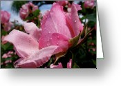 Colorful Roses Greeting Cards - Pink Rose Greeting Card by Rona Black