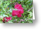 Creative Passages Photo Greeting Cards - Pink Roses Greeting Card by Cassandra Donnelly