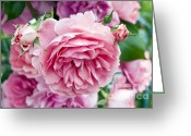 Gardeners Greeting Cards - Pink Roses Greeting Card by Frank Tschakert