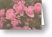 Floral Pyrography Greeting Cards - Pink Roses Greeting Card by Paula Sharlea