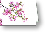 Pink Flower Branch Greeting Cards - Pink spring Greeting Card by Marilyn Hunt