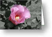 Althea Greeting Cards - Pink Standout Greeting Card by Darla Brock