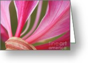Fine Art Flower Photography Greeting Cards - Pink Stripes Greeting Card by Irina Wardas