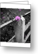 Gray-scale Greeting Cards - Pink Touch Greeting Card by Brian Wallace