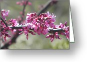 Creative Passages Photo Greeting Cards - Pink tree blossoms Greeting Card by Cassandra Donnelly