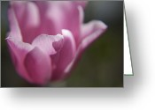 Plants Greeting Cards - Pink Tulip Macro Greeting Card by Enzie Shahmiri