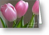 Adrienne Petterson Greeting Cards - Pink Tulips Greeting Card by Adrienne Petterson