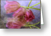 Fuchsia Greeting Cards - Pink tulips Greeting Card by Bernard Jaubert