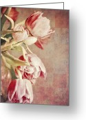 Tulips Greeting Cards - Pink Tulips on checkers Greeting Card by Cathie Tyler