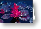 Brian Kerls Greeting Cards - Pink Water Lilies Greeting Card by Brian Kerls