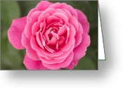 Milos Dacic Photo Greeting Cards - Pinkish flower top view Greeting Card by Milos Dacic