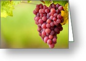 Vinifera Greeting Cards - Pinot Noir Grapes Greeting Card by Jeremy Walker
