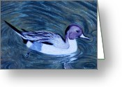 Lakes Pastels Greeting Cards - Pintail Greeting Card by Jan Amiss
