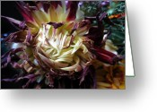 Tamara Stoneburner Greeting Cards - Pinwheel Dahlia Greeting Card by Tamara Stoneburner