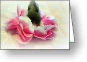 Pink Carnations Greeting Cards - Pirouette Greeting Card by Kathy Bucari