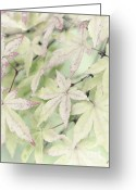 David Lade Greeting Cards - Pistachio maple Greeting Card by David Lade