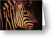 Zebra Photo Greeting Cards - Placidity Greeting Card by Andrew Paranavitana