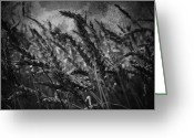 Water Framed Prints Posters Greeting Cards - Plains And Grains Greeting Card by Jerry Cordeiro