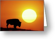 Remote Greeting Cards - Plains Bison (bison Bison), Digital Composite Greeting Card by Altrendo Nature