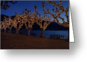 Christmas Lights Greeting Cards - Plane Trees At Christma Greeting Card by Joana Kruse