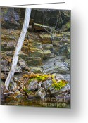 Lichen Image Greeting Cards - Plant Life on Rocky Canadian Lake Shore Greeting Card by Gordon Wood