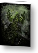 Nightmares Greeting Cards - Plant Man Cometh Greeting Card by Michael Knight