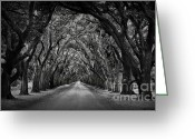 Live Oak Trees Greeting Cards - Plantation Oak Alley Greeting Card by Perry Webster
