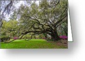 Low Country Greeting Cards - Plantation Oak  Greeting Card by Drew Castelhano