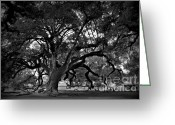 Live Art Greeting Cards - Plantation Oak Tree Greeting Card by Perry Webster