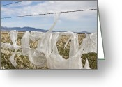 Missoula Greeting Cards - Plastic Garbage Bag on a Wire Fence Greeting Card by Paul Edmondson